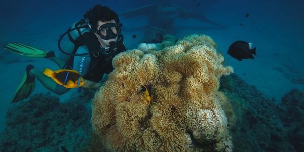 croisiere-plongee-sous-marine-tahiti