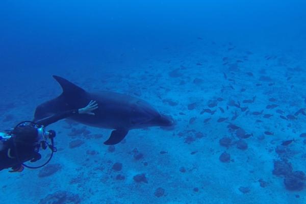 Croisiere-rangiroa-catamaran-tahiti-dauphin