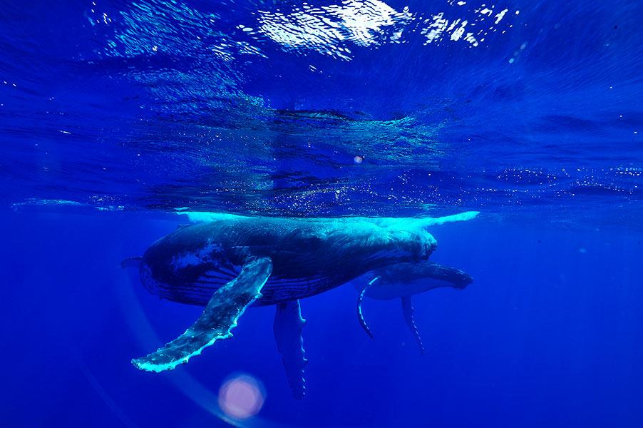 Croisiere-tahiti-baleine-1