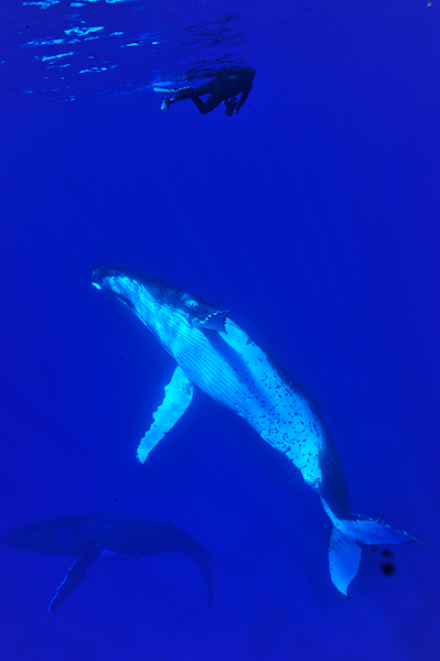 Croisiere-tahiti-baleine-5
