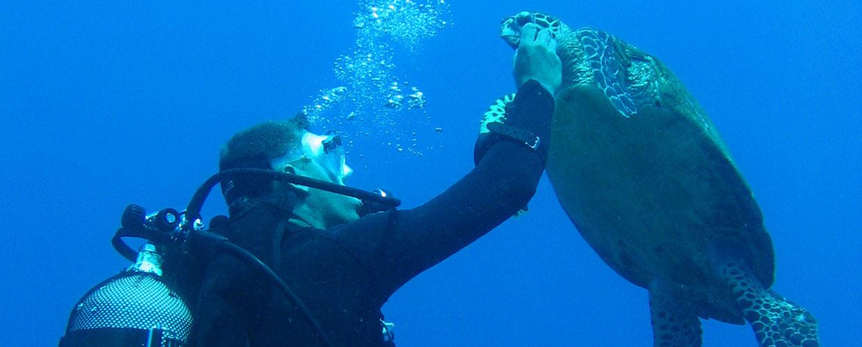 croisiere-tahiti-catamaran-plongee-tortue