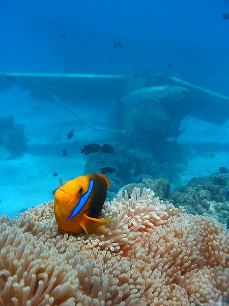 Croisiere-tahiti-plongee-sous-marine