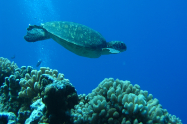 Croisiere-tortue-tahiti-rangiroa