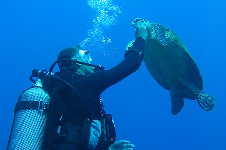 rangiroa-croisiere-catamaran-tahiti-tortue