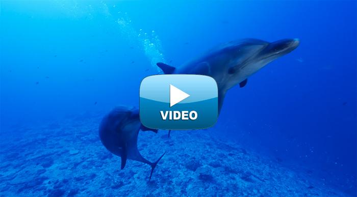 croisiere-tahiti-location-catamaran-bleu-pacifique.jpg