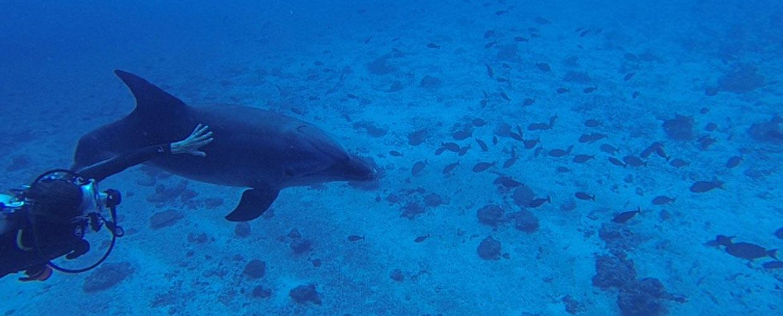 croisiere-tahiti-catamaran-plongee-dauphin