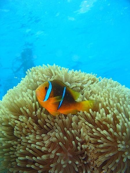 Croisiere Tahiti Plongee Sous Marine 3