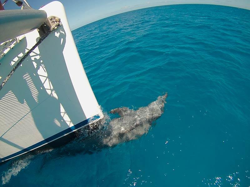 Croisiere-tahiti-dauphin