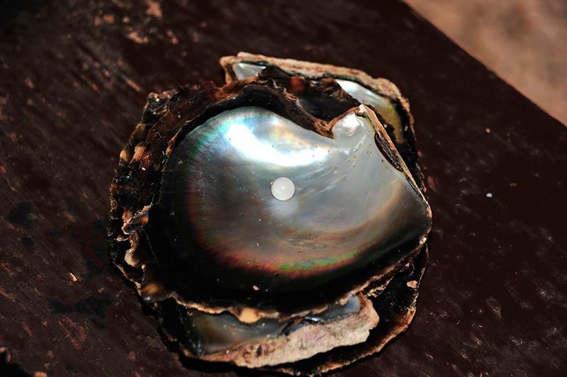 Perle-tahiti-Rangiroa-3