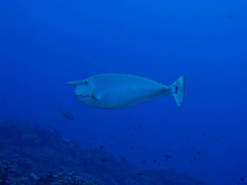 Plongee-tahiti-7